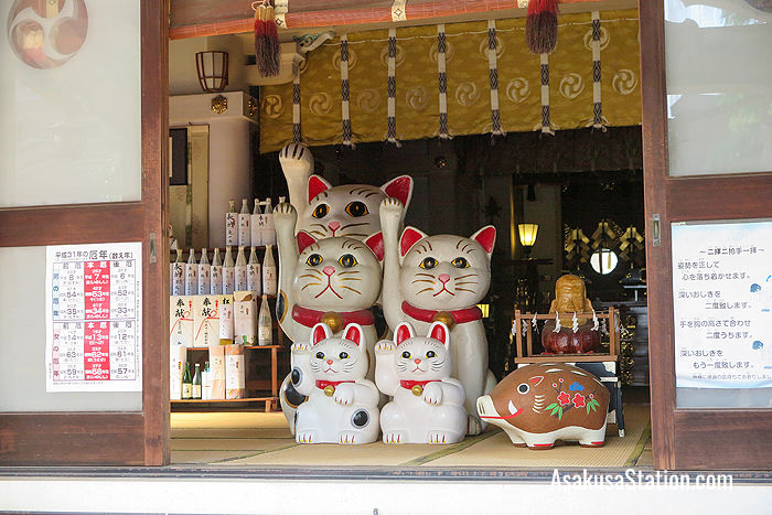 The cats inside the main shrine building