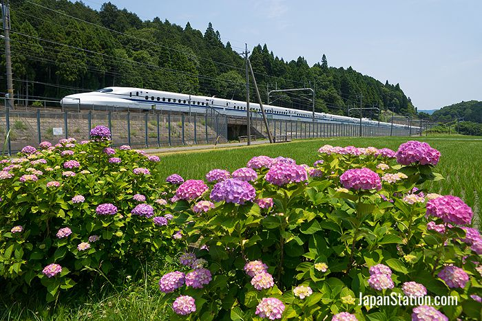 Bullet train lines extend through much of the nation from Honshu Island to Kyushu and Hokkaido