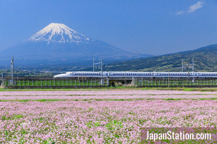 The iconic image of a shinkansen train speeding past majestic Mt. Fuji