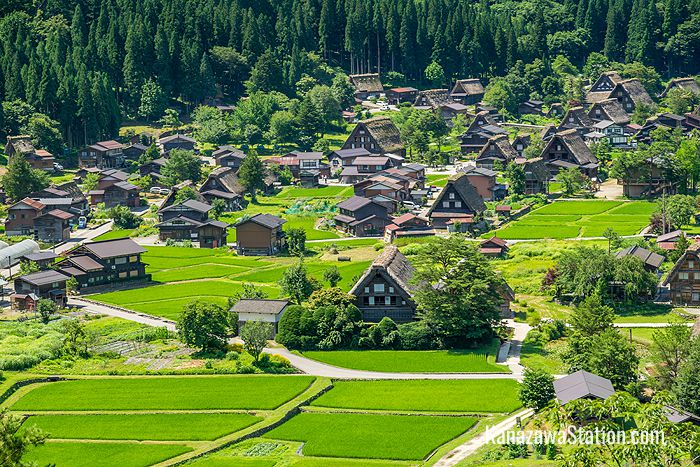 Green fields surround Shirakawa-go in the summer