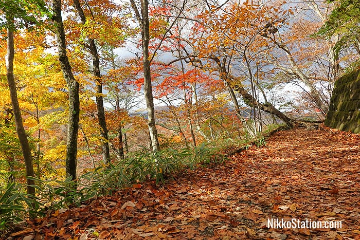 Walking on a carpet of leaves