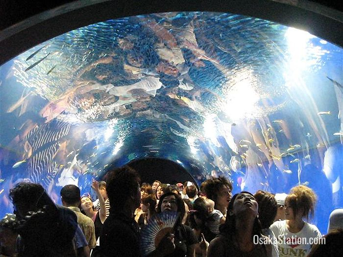 Enter the aquarium through the underwater tunnel of the Aqua Gate!