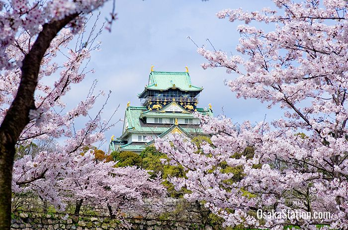 Osaka Castle surrounded by cherry blossoms