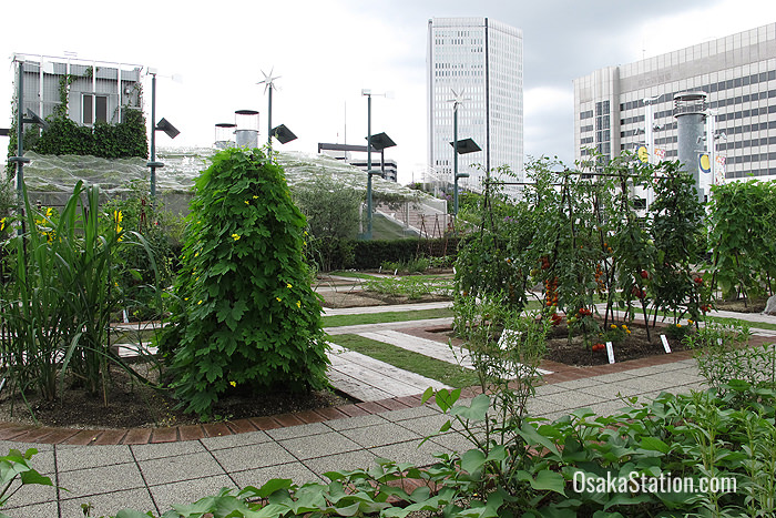 Tenku-no-noen – an urban farm at Osaka Station