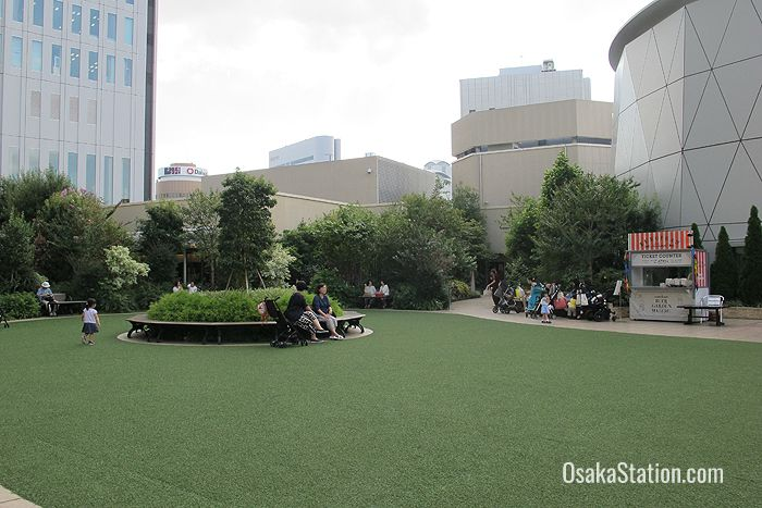 The rooftop garden: the shrubbery is real but the grass is plastic