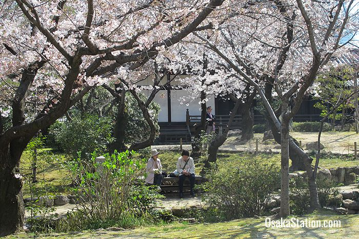 The garden has many cherry trees