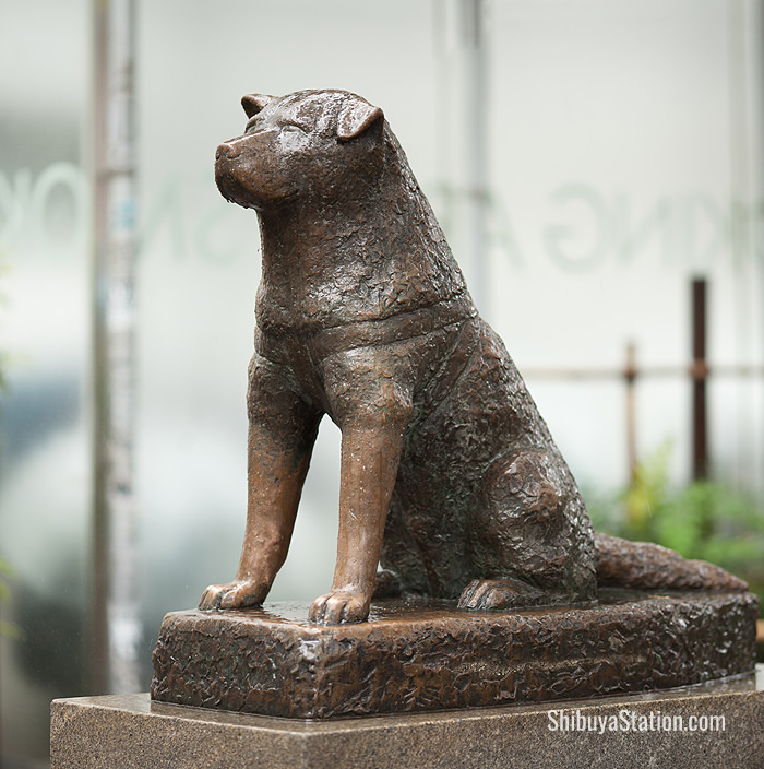 Hachiko the loyal dog was immortalized with this famous statue on the northwest side of Shibuya Station