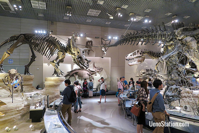 The dinosaur display in the Evolution of Life section