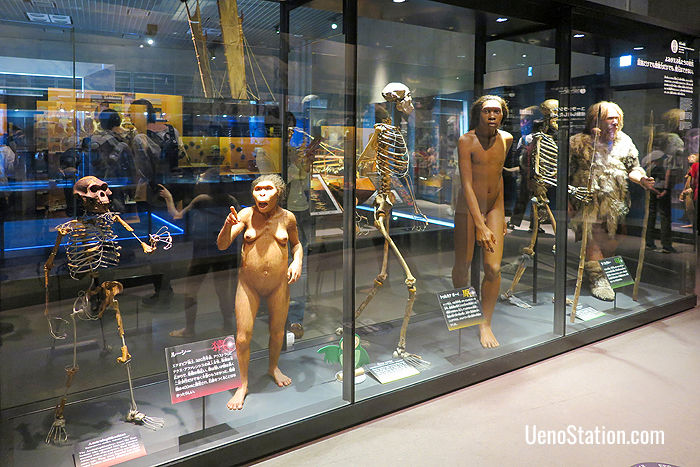 Exhibits depicting the evolution of human beings